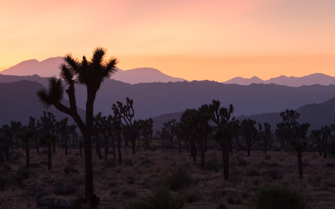 RV Camping Trip to Joshua Tree National Park in California
