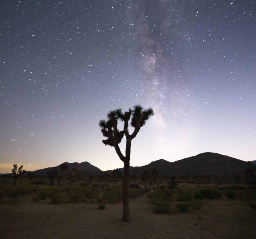 Stargazing at Joshua Tree National Park