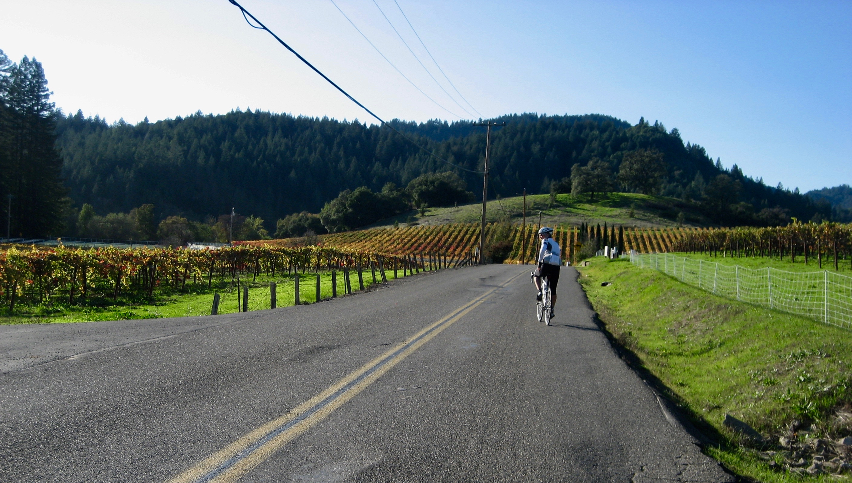 cycling through wine country vineyards