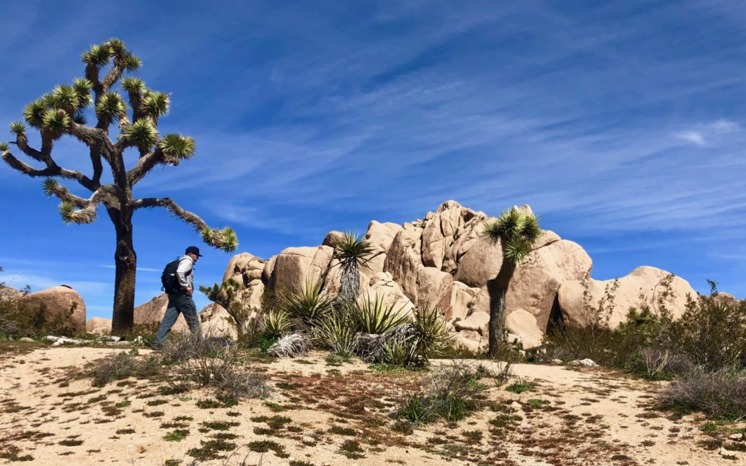 2020 Joshua Tree Desert to San Diego Pines Package